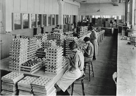 Women workers polishing countless trays of billiard balls during celluloid billiard ball manufacturing