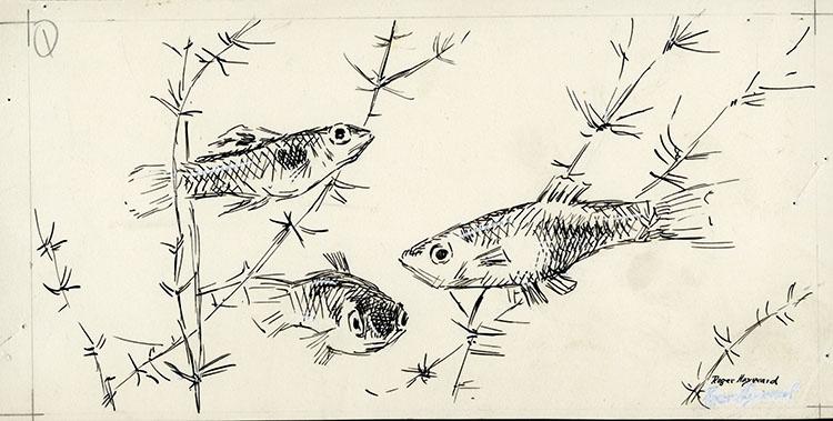 Pen-and-ink drawing of 3 fish swimming among aquatic plants